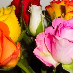 Roses Mixed Colors
